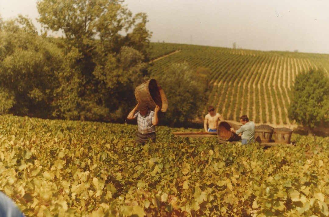 Vendanges 1983 - domaine viticole vente de vin Cépages Gamay & cépages Chardonnay Denicé Beaujolais